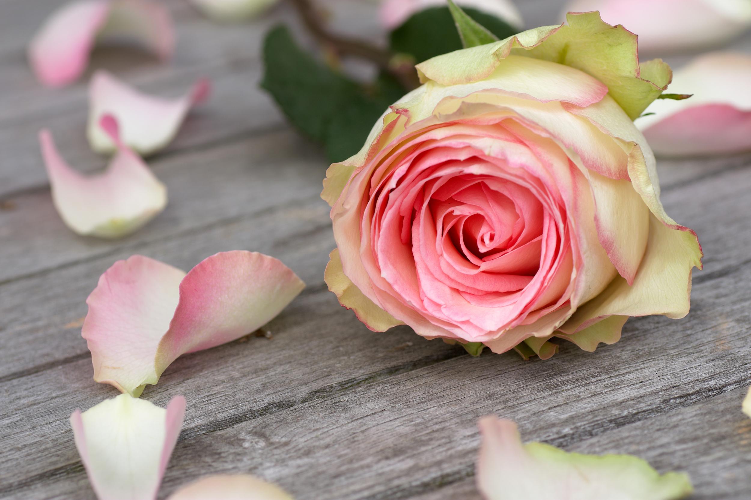 Olio essenziale di legno di rosa per lo spray rilassante Sweet dreams