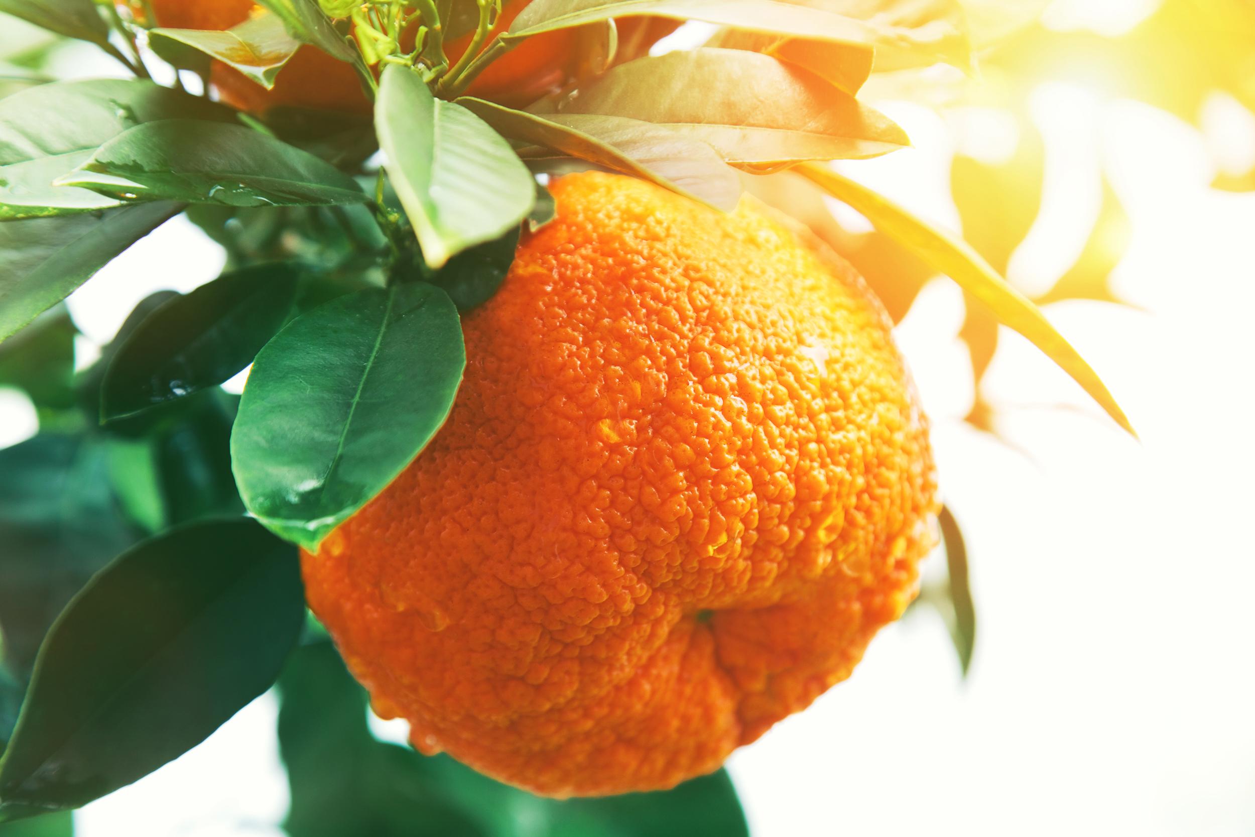Olio essenziale di mandarini per lo spray rilassante Sweet dreams